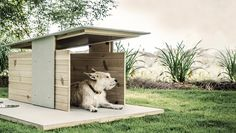 Cool Digs for the Modern Dog