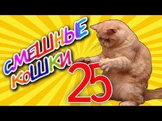 Смешные кошки 25 ● Приколы с животными 2015 ● Funny cats vine compilation - Part 25