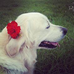 Licia & Flower
