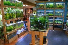. Aquarium Store, Aquarium Garden, Diy Aquarium, Aquarium Design, Aquarium Fish Tank, Planted Aquarium, Reptile Habitat, Reptile Room, Gardening