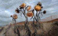 """Candice Bohannon """"Cardoons"""" oil on canvas 30x48"""""""
