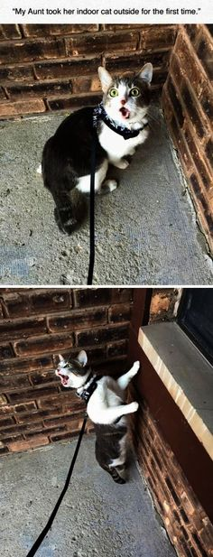 Indoor Cat Outside For The First Time funny cute cat cats adorable kitten hilarious funny pictures funny cats funny images #CuteCats #FunnyCats #Cat #Kittens
