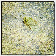 .@ninaninjutsu | C wie Camouflage. Aber so ganz gelingt dem Frosch die Tarnung nicht. #abcfee ...