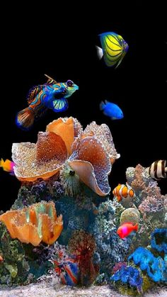 Reef and fish balance Underwater Creatures, Underwater Life, Ocean Creatures, Saltwater Tank, Saltwater Aquarium, Aquarium Fish, Coral Aquarium, Colorful Fish, Tropical Fish