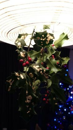 Home made Christmas decoration. Holly collected from the park with gold leaf painted on, hanging from my lamp shade.