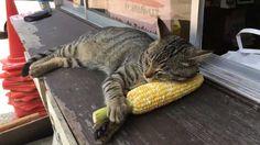 Corn pillow