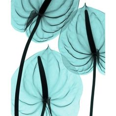 Hugh Turvey's x-rays of flowers | TrendLand -> Fashion Blog & Trend... ❤ liked on Polyvore featuring backgrounds, flowers, blue, photos and fillers