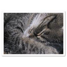 Fotokarte »Katze schläft« http://dickoepfig.ch/produkt/fotokarte-katze-schlaeft/ #cat #katze