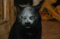 Scary cat is compared to the devil in disguise but feline was playing in flour Cool Cats, I Love Cats, Funny Cats, Funny Animals, Cute Animals, Crazy Cat Lady, Crazy Cats, Black Cat Meaning, Polydactyl Cat