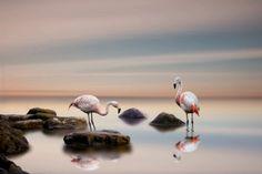 Wallpaper flamingo, bird, ocean, Animals HD Desktop Wallpaper for Ultra HD TV Flamingo Wallpaper, Bird Wallpaper, Laptop Wallpaper, Original Wallpaper, Animal Wallpaper, Wish Gifts, Festival Image, Flamingo Bird, High Resolution Wallpapers
