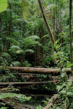 Tropical Art, Tropical Garden, Tropical Plants, Landscape Photos, Landscape Photography, Nature Photography, Jungle Pictures, Mystical Forest, Rainforests