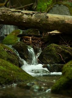 forest brook flowing in forest