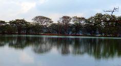 "Reflection of nature within nature.. natural mirror @ ""kukkara halli lake"", mysore"