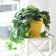 Houseplants Can Actually Make You Healthier Having plants in your space can help your mental and physical health in multiple ways.Having plants in your space can help your mental and physical health in multiple ways. Indoor Plants Clean Air, Best Indoor Plants, Indoor Plant Pots, Cactus House Plants, Garden Plants, Cactus Decor, Cactus Art, Ivy Plants, Water Plants