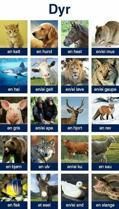 Dyr - animal names in Norwegian Icelandic Language, Swedish Language, Learn Swedish, Learn German, Norway Language, Norwegian Words, Danish Words, Norway Winter, Norwegian Vikings