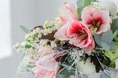 Blume des Monats Dezember: Amaryllis
