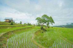 7 Gambar Gambar Kenampakan Alam Terbaik Alam Gambar Indonesia