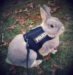 Love pictures of bunnies. Reminds me of the Disney movie Zootopia Disney Love, Disney Magic, Disney And Dreamworks, Disney Pixar, Disney Parks, Disney Characters, Judy Hopps Cosplay, Officer Judy Hopps, Zootopia Cosplay
