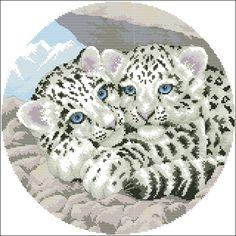 tigres-blancos.jpg (700×700)