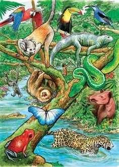 Cobble Hill Life in Tropical Rainforest 35 Piece Jigsaw Puzzle: A great learning activity that grows with the child. For ages 3 and up this is a fun 35 piece tray puzzle with interesting facts about the image on the back of each puzzle! Rainforest Activities, Rainforest Project, Rainforest Theme, Rainforest Creatures, Animals Of The Rainforest, Rainforest Pictures, Forest Habitat, Forest Decor, Tropical Forest