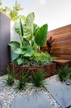 Amazing Fresh Frontyard and Backyard Landscaping Ideas Enjoy collection backyard styles and give me know your thoughts about these garden design ideas.Enjoy collection backyard styles and give me know your thoughts about these garden design ideas. Tropical Garden Design, Small Garden Design, Tropical Landscaping, Modern Landscaping, Front Yard Landscaping, Landscaping Ideas, Backyard Ideas, Outdoor Landscaping, Acreage Landscaping
