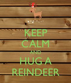 KEEP CALM AND HUG A REINDEER. Another original poster design created with the Keep Calm-o-matic. Buy this design or create your own original Keep Calm design now. Christmas Quotes, All Things Christmas, Christmas Time, Xmas, Keep Calm Posters, Keep Calm Quotes, Keep Clam, Keep Calm Signs, Tablerunners