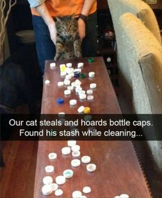 Funny Animal Pictures Of The Day - 83 Pics