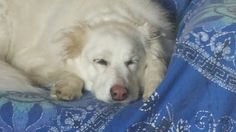 Dorme come 1 angelo