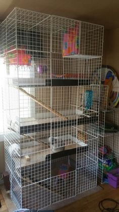 Pixi and diamonds with loft condo. Diy Bunny Cage, Bunny Cages, Rabbit Cages, Ferret Cage, Pet Cage, Dwarf Rabbit, Pet Rabbit, Indoor Rabbit Cage, Rabbits