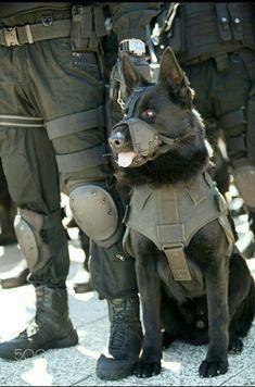 Black German Shepherd Military Working K9 - Hero & may God Bless you! #germanshepherd