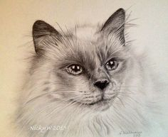 Graphite pencil drawing of a Siamese cat. Approx 8 hours.