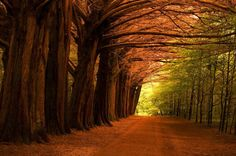 Magnificant tree lined road from Tommy Hannon