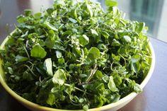 Toute personne qui fait attention à sa santésait que c'est une très bonne idée de manger des légumes verts à feuilles et des agrumes colorés. Au fil du temps, les recherches ont montré leur association avec la réduction du cancer et les maladies chroniques. En fait, la plupart d'entre nous savent que nous devrions consommer …
