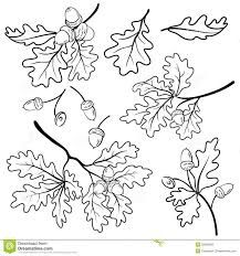 Image result for oak tree leaf vector