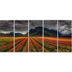 DesignArt 'Beautiful Colored Tulips Panorama' 5 Piece Photographic Print on Wrapped Canvas Set