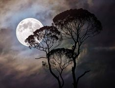 Free Image on Pixabay - Moon, Tree, Dark, Moonlight, Night Free Pictures, Free Images, Full Moon, Moonlight, Mystic, Scenery, Clouds, Sky, Dark