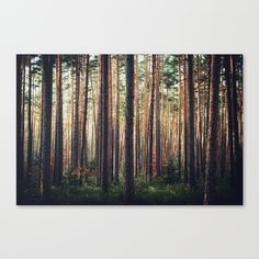 #society6 #art #woods #forest #print #canvas #trees #shop #shopping
