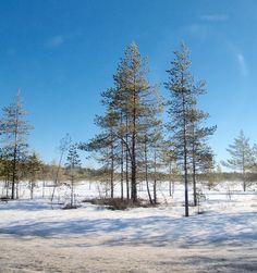 Näitä luonto metsään nyt auttaminen siellä suojelu näitä tekeminen eläimiä lintuja
