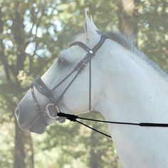 Guys, as of 1 hour ago Dy'on Hunter Rein... is available to buy on our premium webstore. Simply click here http://www.justridingshop.com/products/dyon-hunter-reins-5-8-b250?utm_campaign=social_autopilot&utm_source=pin&utm_medium=pin to see it.