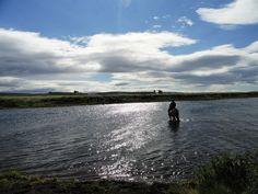 Reiten auf Isländern