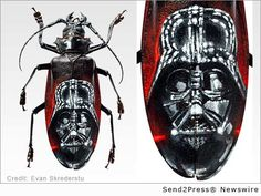 ArteQuesta Urban Artist Evan Skrederstu Commissioned to Paint Star Wars Beetle as Part of Mask Series :: MILL VALLEY, Calif., Jan. 30, 2015 (SEND2PRESS NEWSWIRE) -- Leading fine art investment company ArteQuesta today announced that urban artist Evan Skrederstu has been commissioned for a Star Wars themed piece in a crescendo to his acclaimed Mask Series of painted bugs. The commissioned image of the iconic Darth Vader mask