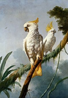missfolly: A Pair of Sulphur Crested Cocatoos, by (after) Jacques Barraband (via imgTumble)