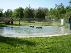 The dog park at All Star Pet Resort
