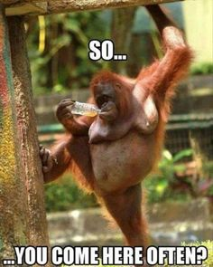 You have to like it it is a monkey