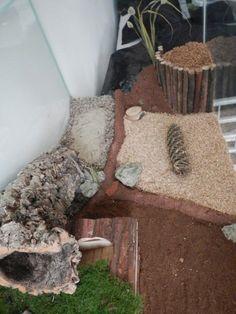 Hamster natural habitat / hamster terra