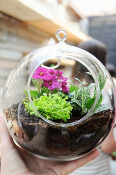 My Terrarium by Creature Comforts, via Flickr