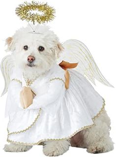 Angel Pet Costume Dog's Cherub Apparel Large Holiday Dress Up Halloween Party Pet Costumes For Dogs, Dog Halloween Costumes, Cool Costumes, Halloween Party, Christmas Costumes, Dance Costumes, Pet Shark, California Costumes, Hound Dog