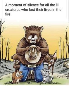 Post with 3998 votes and 113804 views. Tagged with memes, aww, animals, australia, inspiring; A moment of silence for Australia Animals And Pets, Cute Animals, Unique Animals, Animals Images, Save Our Earth, Smokey The Bears, Moment Of Silence, Rainbow Bridge, Medusa