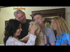 Lucky Dog- New Best Friend