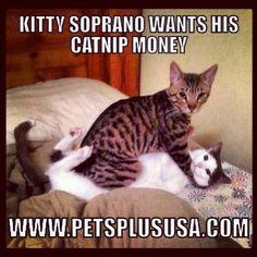 #kitty #soprano want his #catnip #money #petsplususa